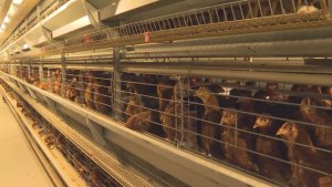 Application of heat pump unit in agriculture and animal hus