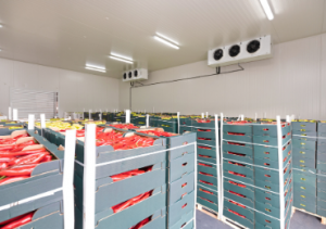vegetable-and-meat-cold-room-storage-chiller