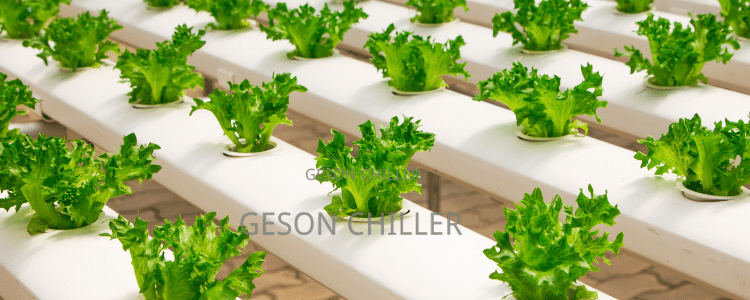 water chiller system hydroponics